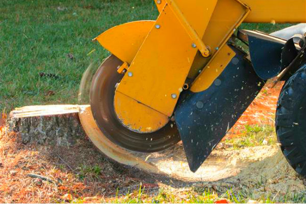 5 benefits of Stump Grinding Services in Brisbane